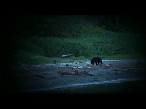 vancouver-island-eco-tourism---wilderness-international