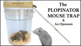 The Plopinator Mouse Trap - Great At Catching Mice & Attracting Opossum. Mousetrap Monday Video