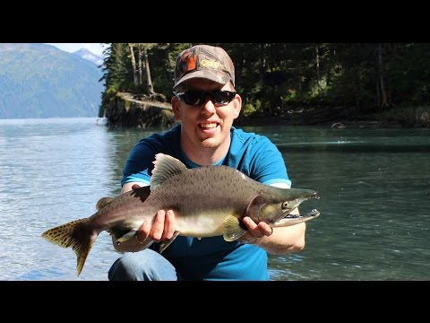 Catching pink salmon in Whittier Alaska - fishing for humpys