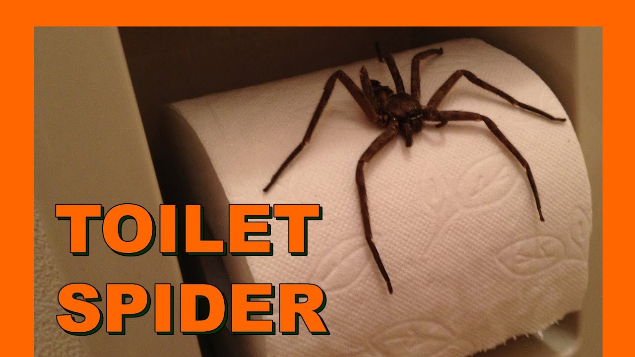 Big Toilet Spider トイレで大きなクモ Real Japan Monsters 日本のモンスター