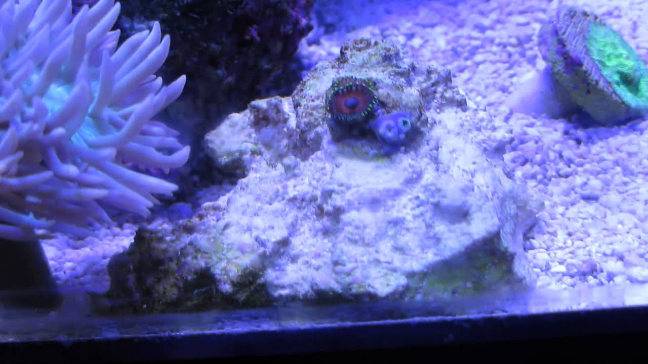 Marineland 27 gallon cube (Almost 6 months!) with 10 ...