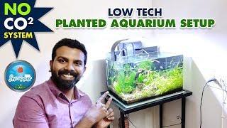 Low Tech Planted Aquarium Setup | No Co2 Planted Tank