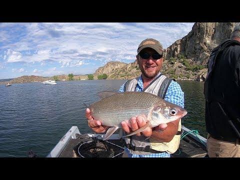 Fishing For Summertime Lake Whitefish In Washington