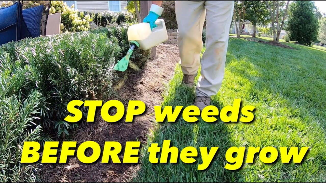 How To Stop Weeds From Growing In Your Natural Areas You