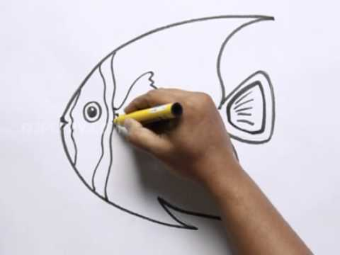 how to draw a french angelfish youtube