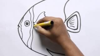 How to Draw a French Angelfish