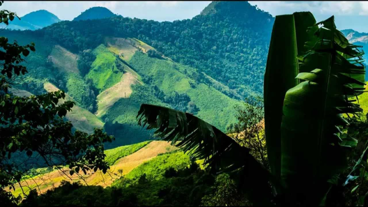 Global Forest Watch | World Resources Institute