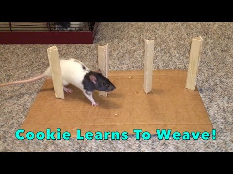 Cookie Learns To Weave!