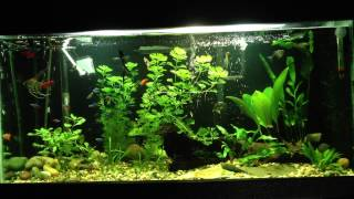 awesome 20 gallon freshwater planted tank   tonytanks