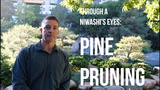 Through A Niwashi's Eyes - Pine Pruning