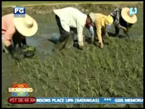 Special Report: Agri Nurture Inc.