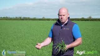 Avoiding stress in spring barley is essential going forward