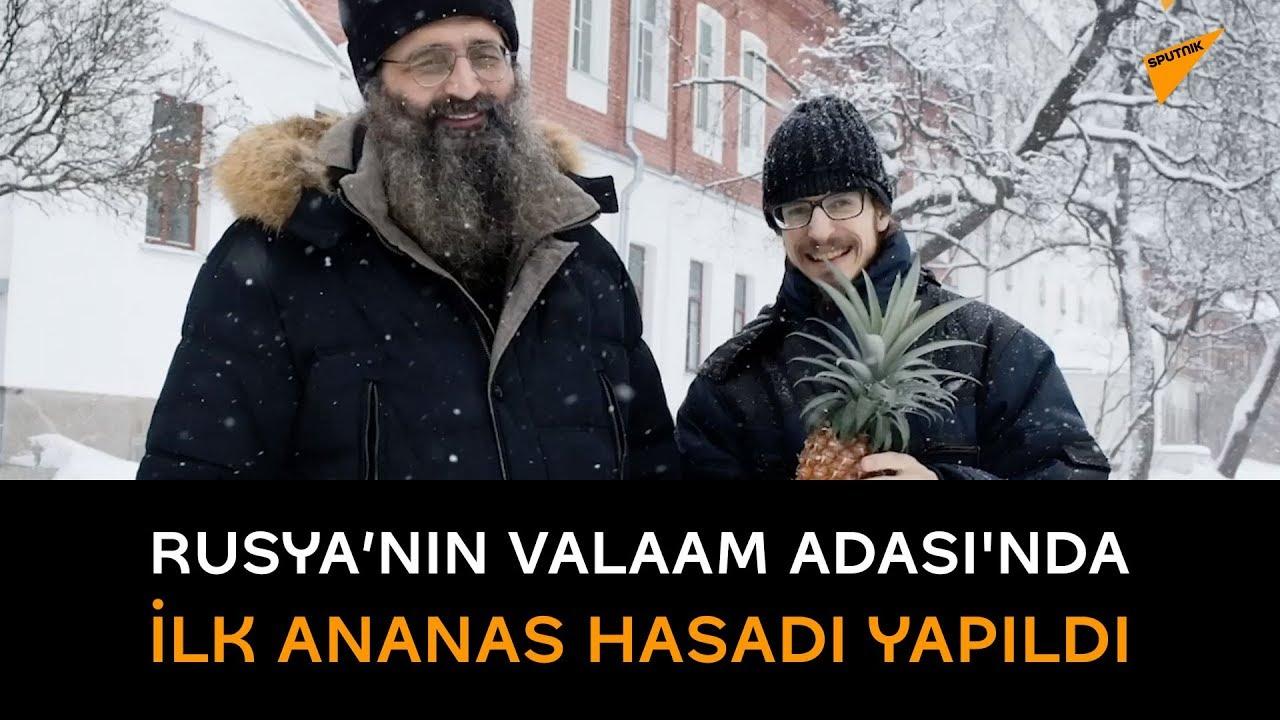 Rusya'nın Valaam Adası'nda ilk ananas hasadı yapıldı
