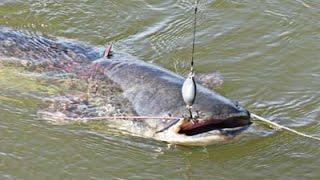 Рыбалка на большого сома в Казахстане