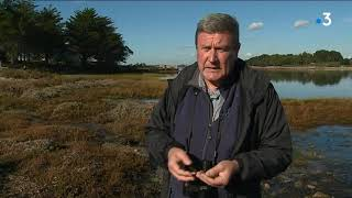 Le cri d'alarme des ornithologues dans le Golfe du Morbihan