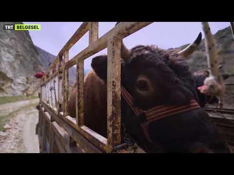Kıyıdan Köşeden Hayatlar - 1.Bölüm Fragmanı - TRT Belgesel