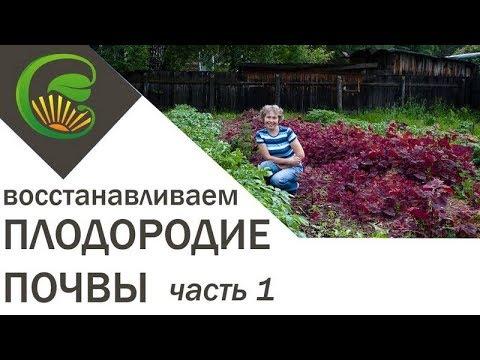 видео: Как я сделала почву плодородной, 1 часть.
