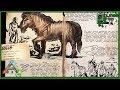 Ark Basics - Equus/Unicorn - EVERYTHING YOU NEED TO KNOW!