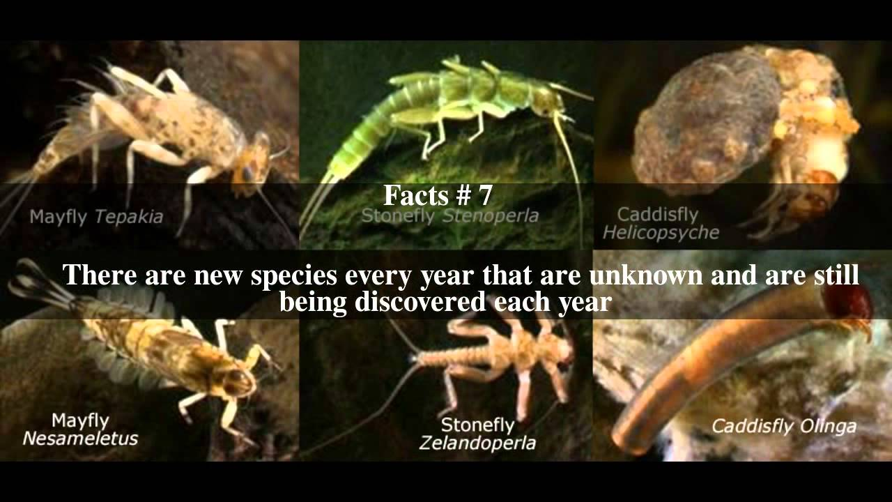 indicator species top 17 facts youtube