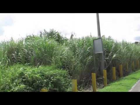 Ray's Push Bike Ventures - Panama Canal