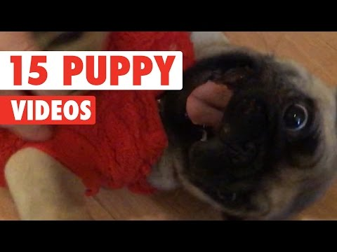 15 Funny Puppy Videos Compilation 2016