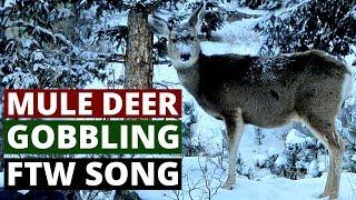 Mule deer gobbling FTW song (360 Music Video)