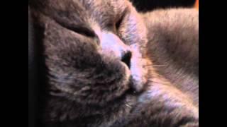 Коту снится еда