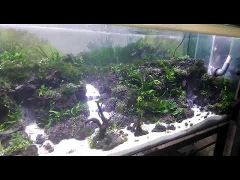 Tebing air terjun aquascape - YouTube