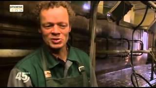 Streitfall Biogas - Goldrausch auf dem Acker