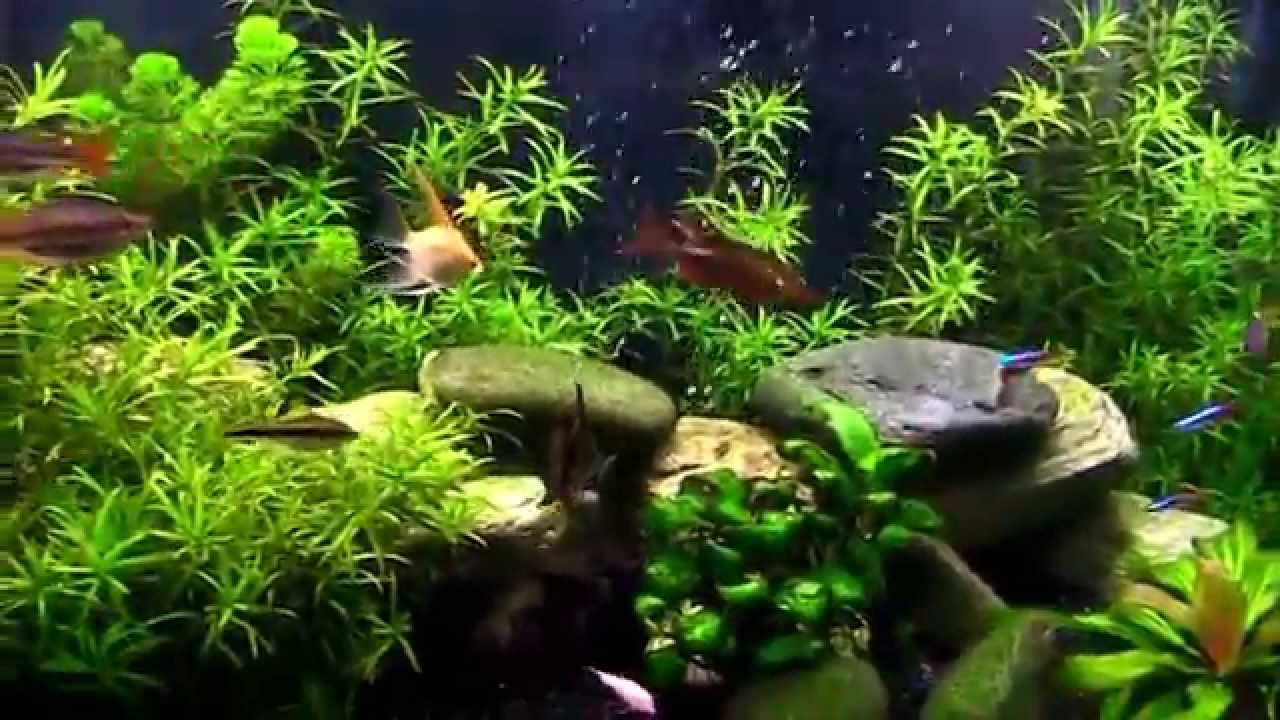 Freshwater Or Tropical Planted Community Fish Tank No
