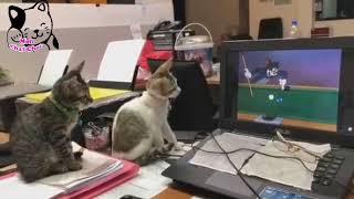 #قطط مضحكة 😻 chats trop drôles 😁 funny #cats#
