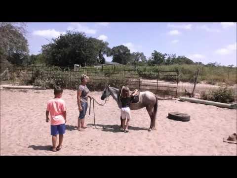 Kids Breaking a Caspian Mare to Ride