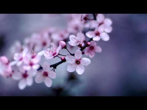 Spring Blossom. Deep house mix