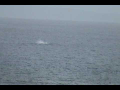 Humpback Whale Sounds and Songs