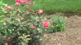 Chris Orser Landscaping: Edging, Flower Beds, Brick Retaining Wall