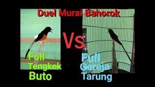 Gambar cover WOWW!! MURAI BATU Bahorok Gacor !! Bongkar isian Tengkek Buto Vs Gereja Tarung