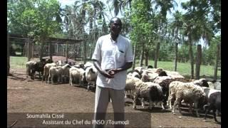Cote d'Ivoire: vers une éradication de la peste des petits ruminants