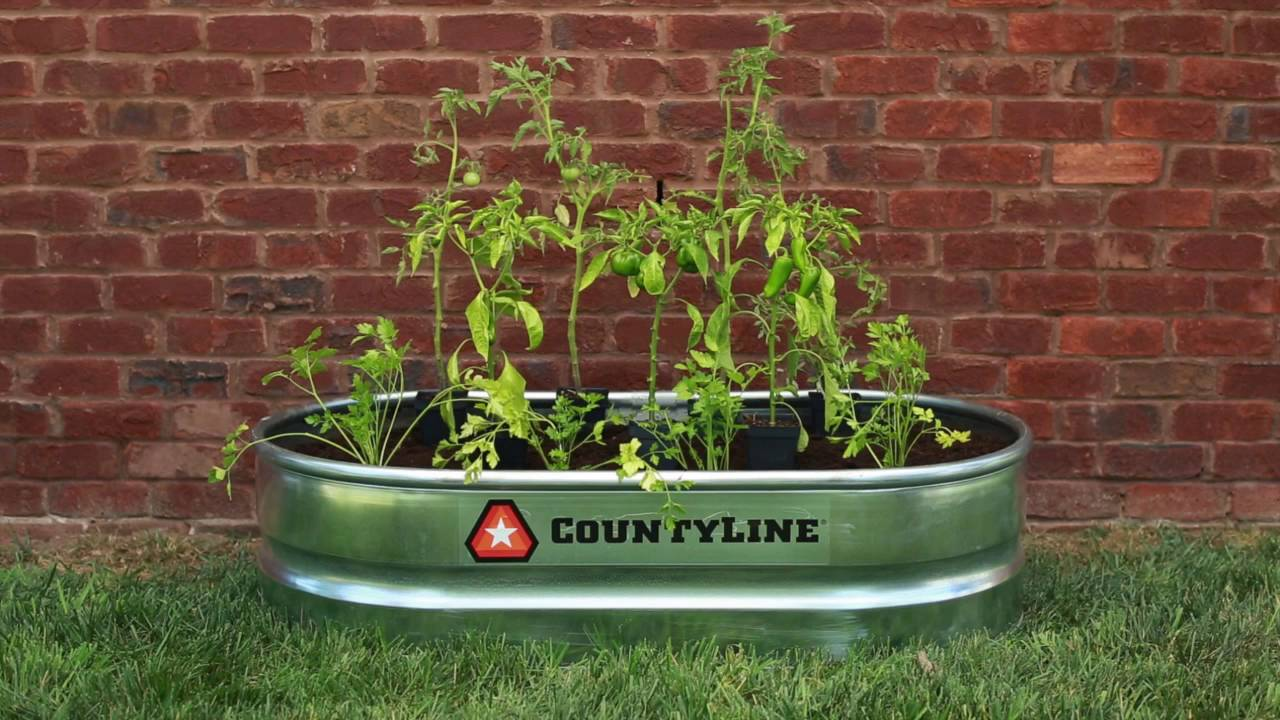 Build A Stock Tank Salsa Garden