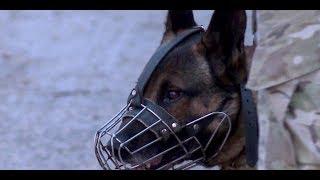 Kampfhunde: Wie gefährlich sind sie?