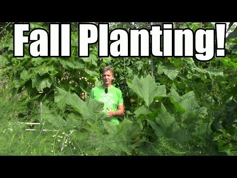 What I'm Planting for Fall & Free Planting Calendar Tool for Cool Climates