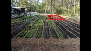 New Garden Beds - NO TILL with CHICKENS
