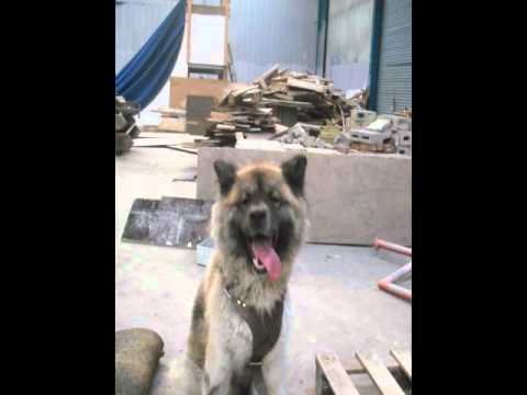 Retarded Dog – Funny