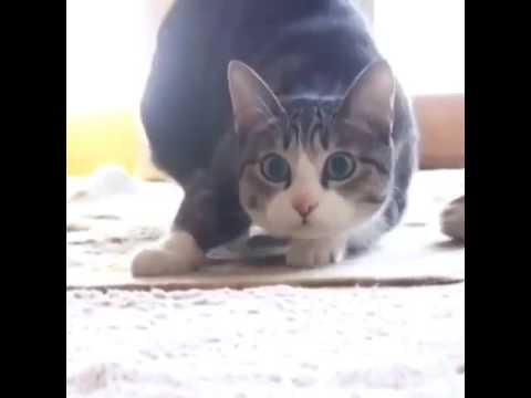 2016 Crazy  Funny Cats Compilation