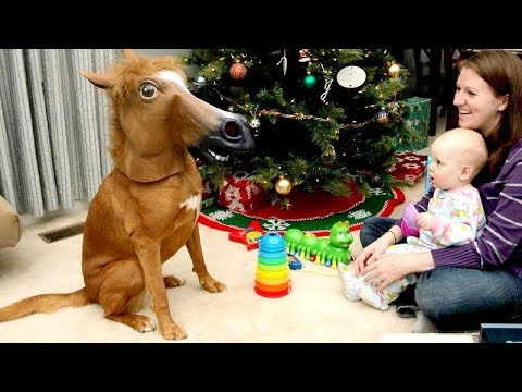ANIMAL REACTIONS to CHRISTMAS GIFTS are even FUNNIER THAN KID REACTIONS - Funny compilation