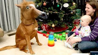 ANIMAL REACTIONS to CHRISTMAS GIFTS are even FUNNIER THAN KID REACTIONS - Funny compilation thumbnail