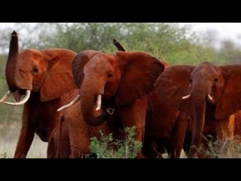 Elephants have legal rights too: Animal rights group