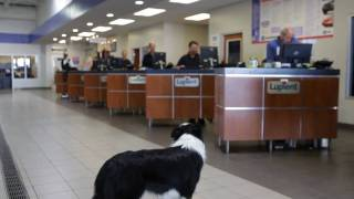 """Lupient Buick GMC """"Go Fetch"""" a new car or truck today."""