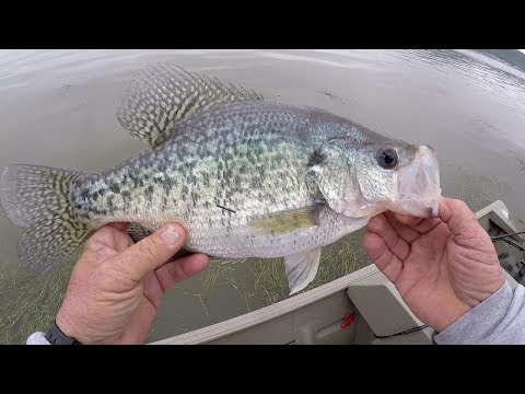 Crappie Fishing - HUGE SLAB! My BIGGEST Crappie On Video! (So Far)