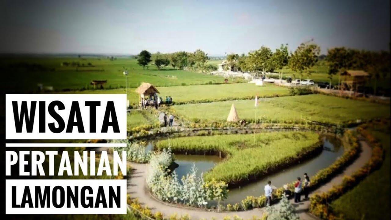 Wisata Pertanian di Lamongan - NET. JATIM