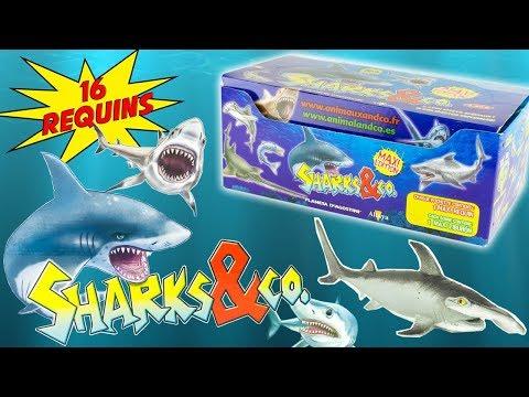 SHARKS & CO Boite Complète de 16 Requins Pochettes Surprise Altaya Jouet Toy Review Juguetes Tiburon